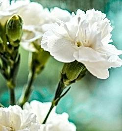Flor española