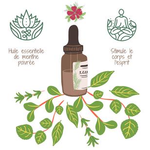 Aromathérapie: la menthe poivrée