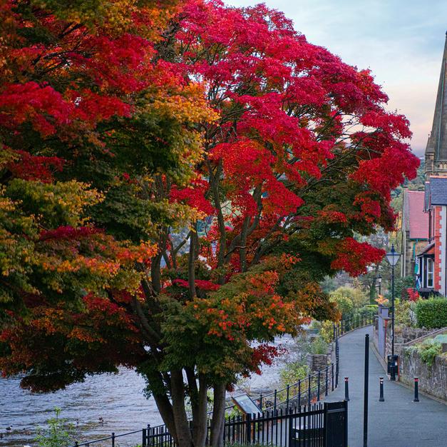 Riverside walk tree
