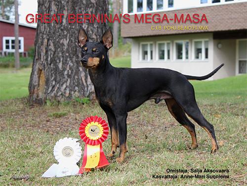 GREAT BERNINA'S MEGA-MASA
