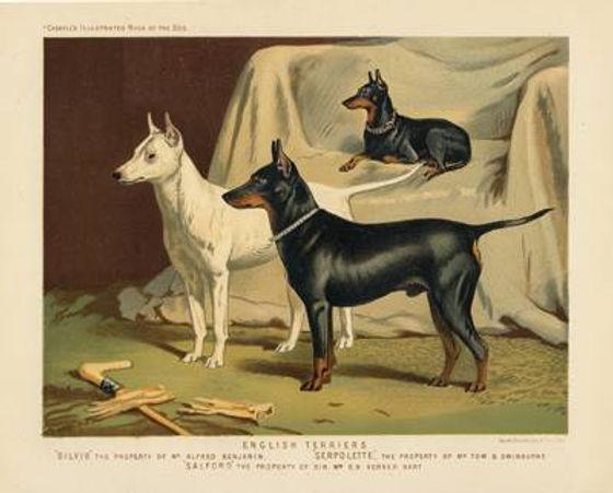 english-terriers-400.jpg