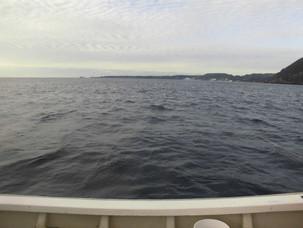 イルカがいっぱい来てます、魚が、逃げまくってますね。