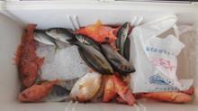 昨日の釣の釣果です。