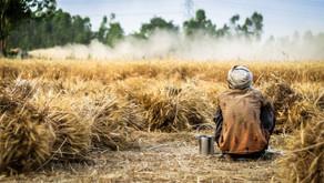 Les céréales : un atout santé ?