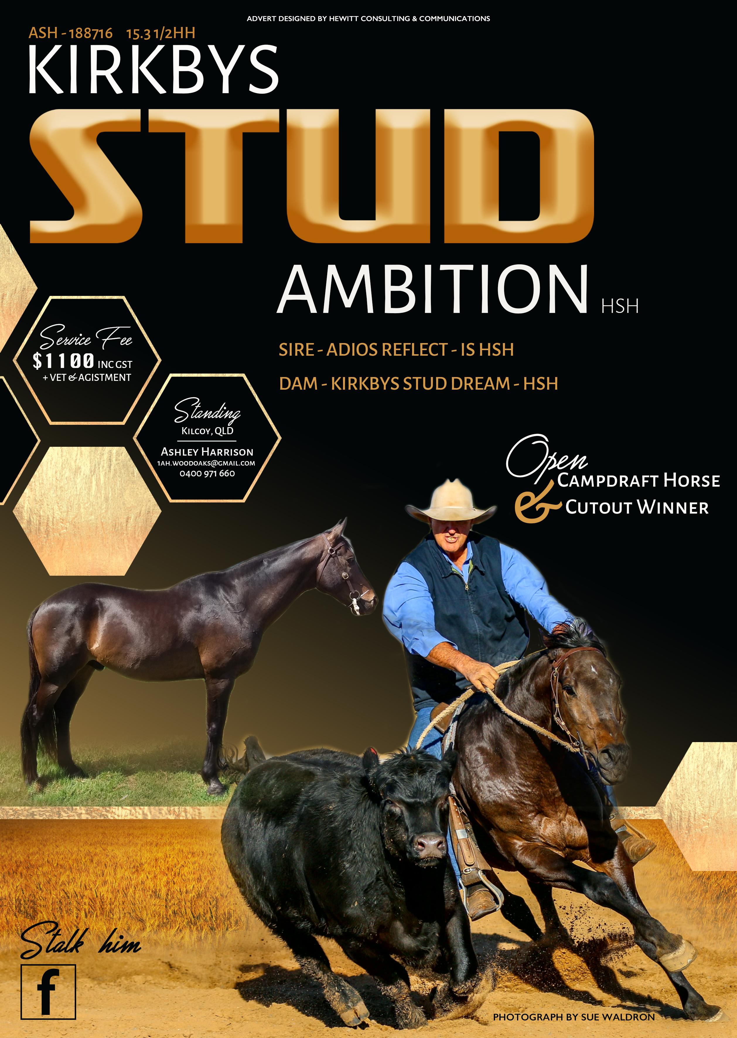 Kirkbys Stud Ambition Advert
