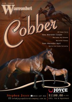 Warrenbri Cobber