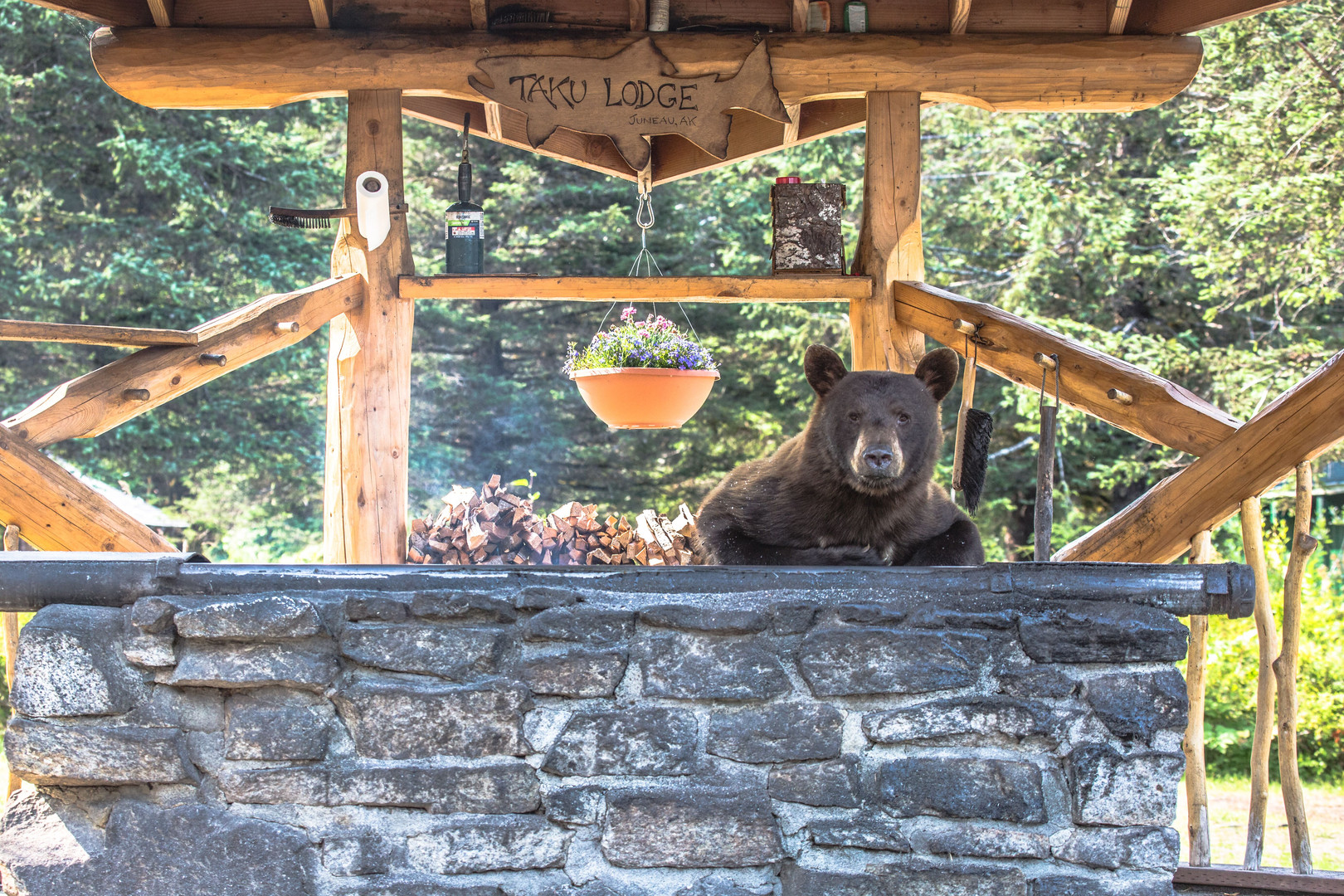 Bear at Grill Taku Lodge 2019.jpeg