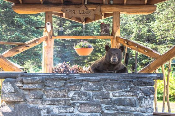 Bear at Grill Taku Lodge 2019.jpeg