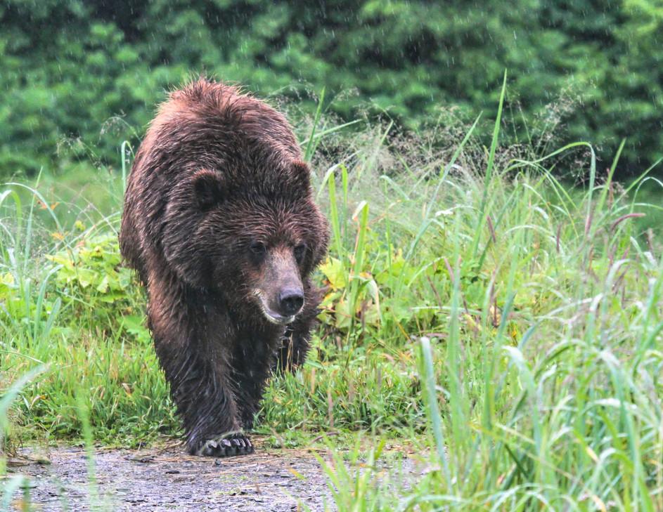 Fav Bear in Rain Pack Cr 2018.jpeg