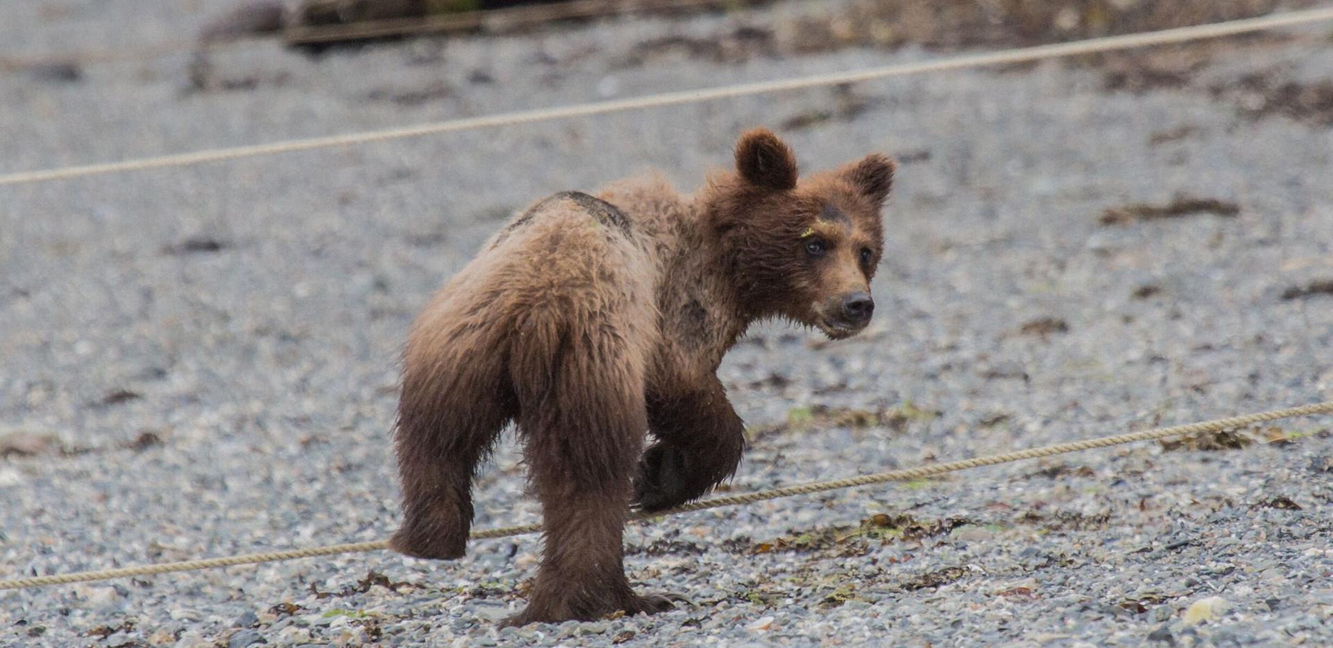 Bear Cub Pack Cr 2019.jpeg