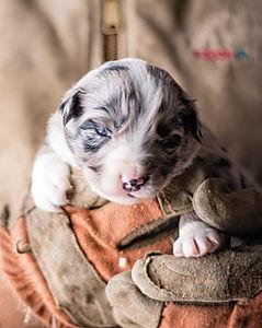 puppy 5 - female.jpg