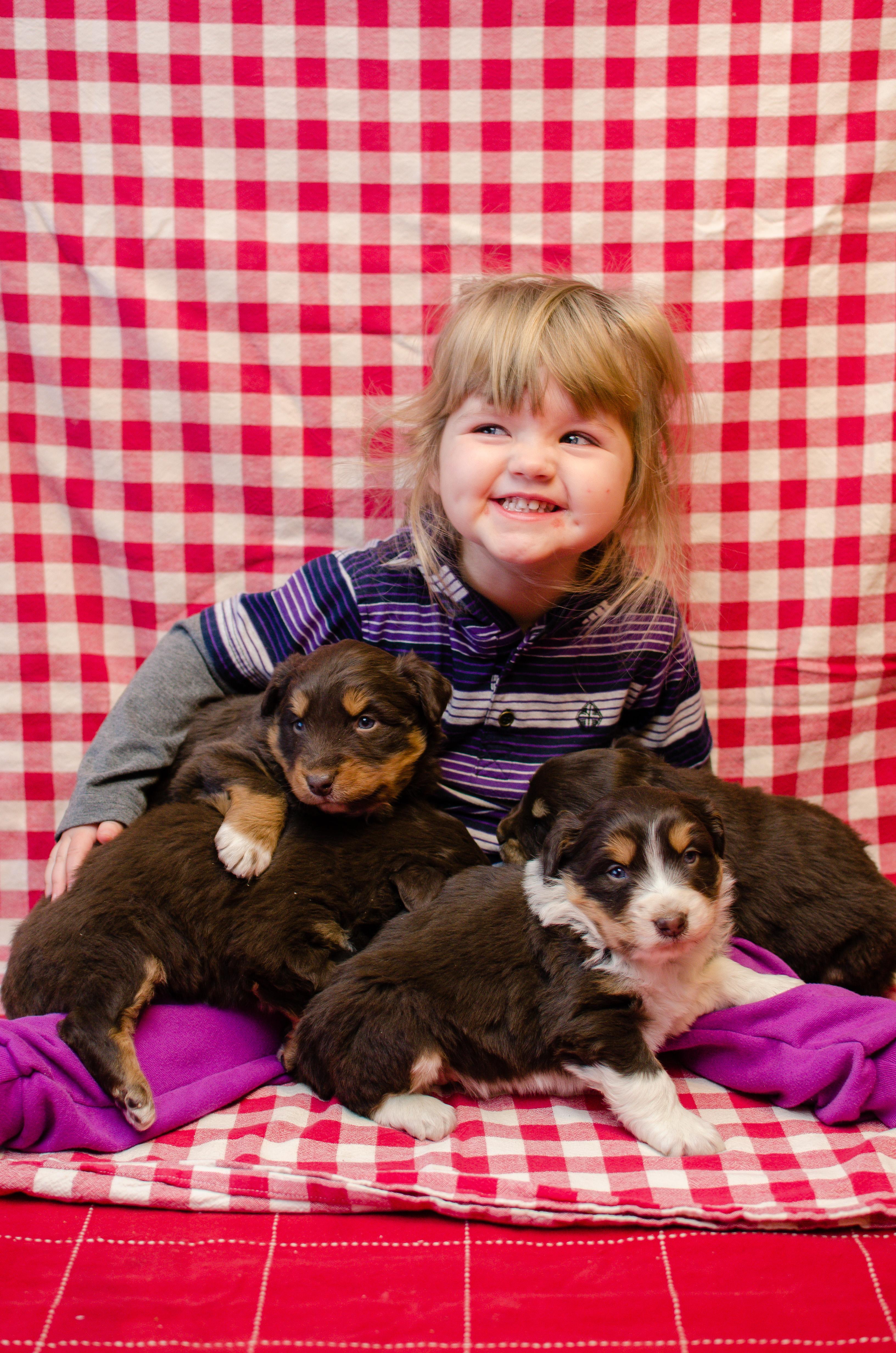Puppies_Jan_2018-2