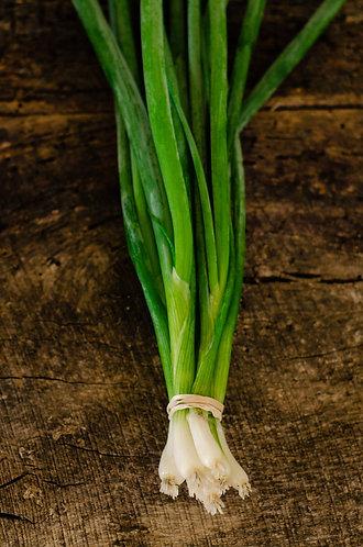 Onion, Spring