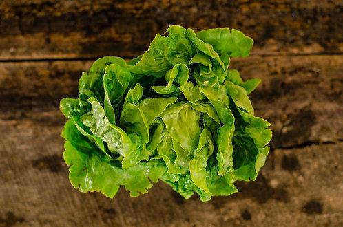 Lettuce, Head