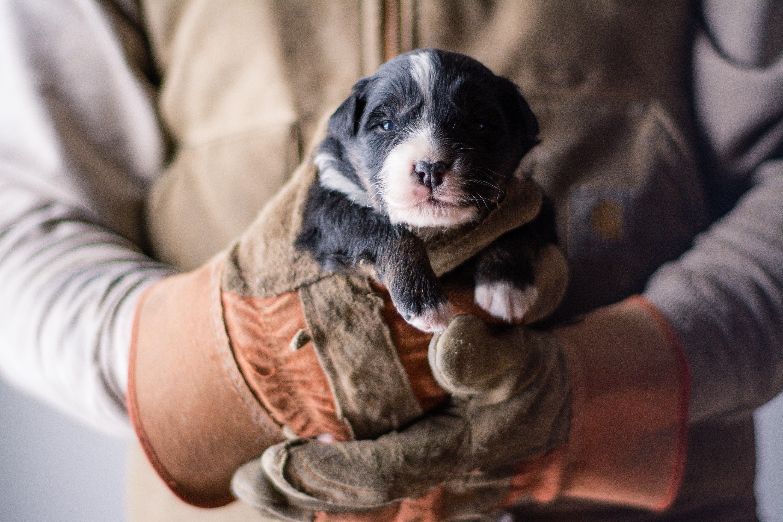 puppy 3 - male-2