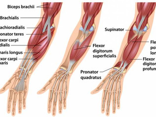7 Exercises To Maximize Hand, Wrist, And Forearm Strength