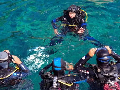 Plonger, pourquoi faire ?