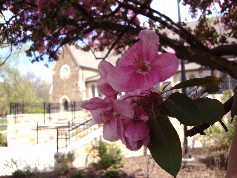 Springtime at FCC