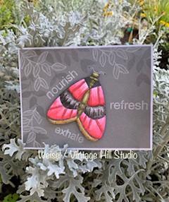Big & Bold Moth Card
