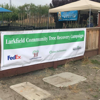 Larkfield Community Tree Recovery
