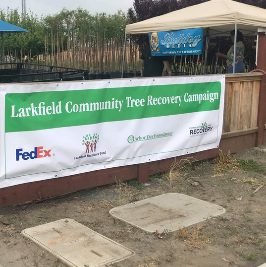 Larkfield Community Tree Recovery