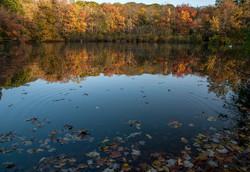 Centerport in Autumn