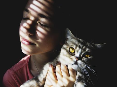 Chiens | Chats, l'assurance au poil