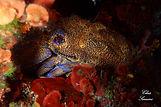 Medusa Diving Ponza - Isola di Ponza-Immersioni Sub-Snorkel-Apnea-Relitti-Attività Ludico Ricreative-Corsi Sub-Ponza-Roma