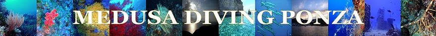 Medusa_Diving_Ponza_Immersioni_Full Day_Corsi_Sub_Snorkel_Escursioni_Gite_Relitti_Biologia_Marina
