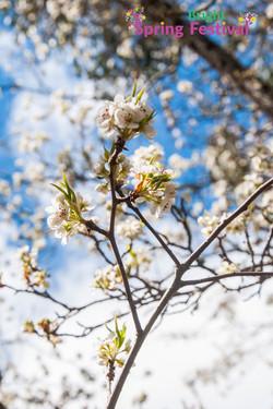 Brigh Spring Festival - 036