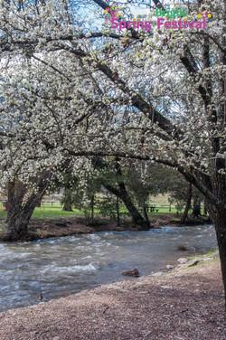 Brigh Spring Festival - 033