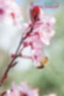 Brigh Spring Festival - 055.jpg