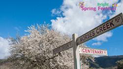 Brigh Spring Festival - 061