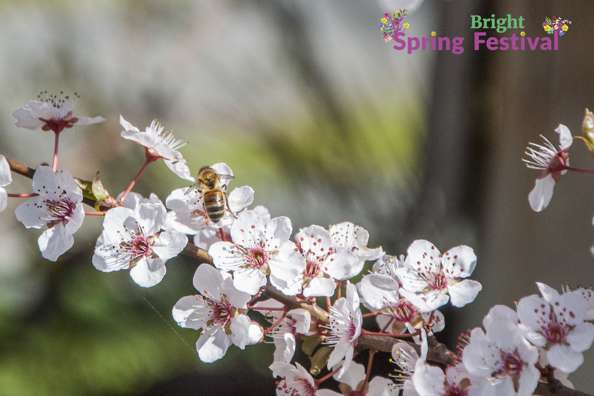 Brigh Spring Festival 1409 - 007