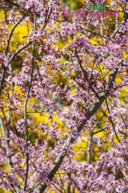 Brigh Spring Festival - 049
