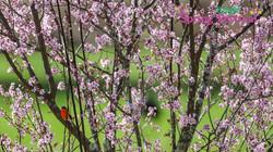 Brigh Spring Festival - 069