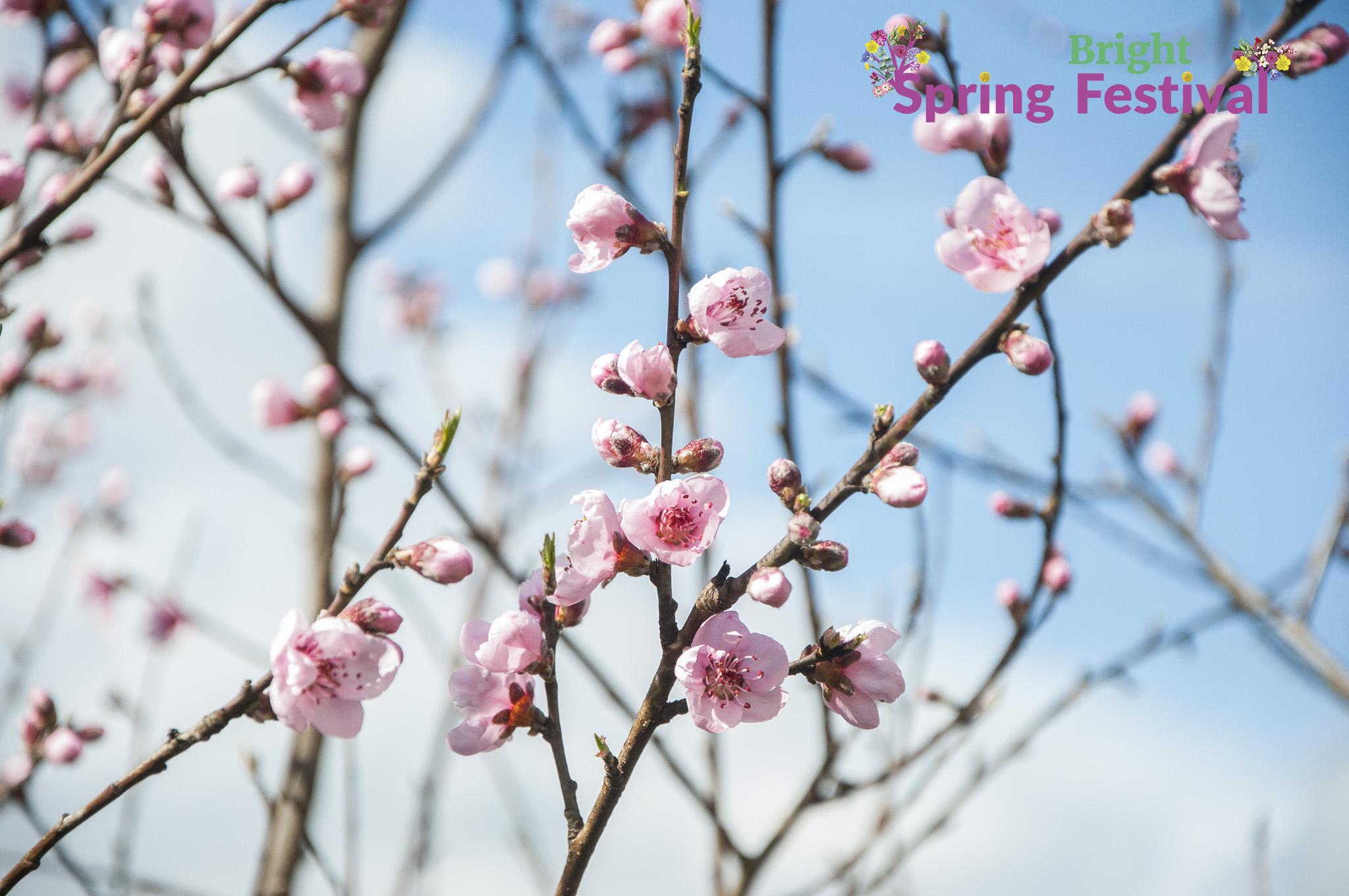 Brigh Spring Festival 1509 - 010