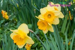 Brigh Spring Festival - 063