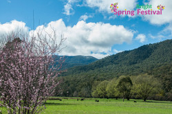 Brigh Spring Festival - 047
