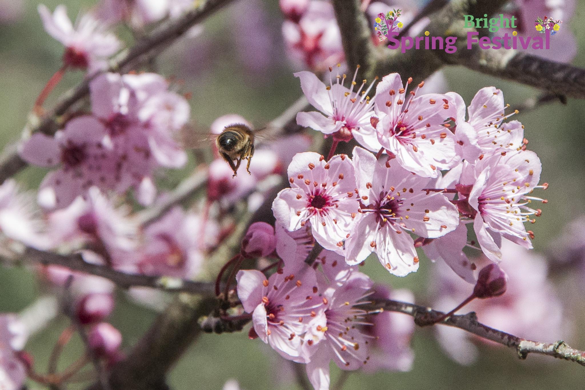 Brigh Spring Festival - 054