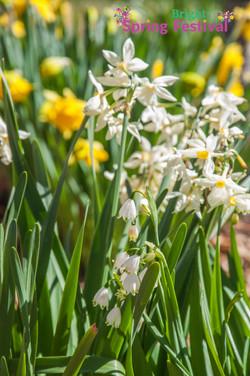 Brigh Spring Festival - 043