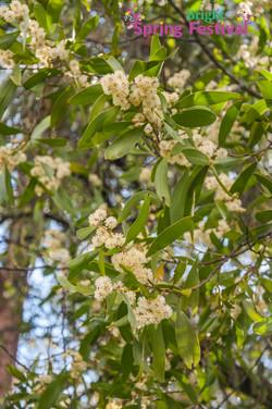 Brigh Spring Festival - 017