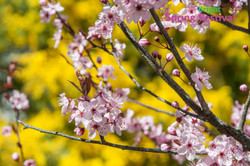 Brigh Spring Festival - 051