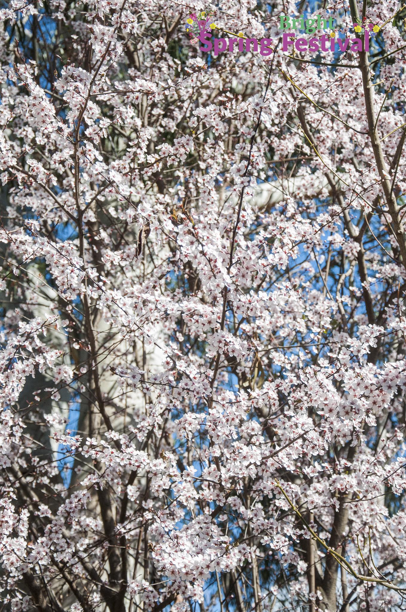 Brigh Spring Festival 1409 - 005