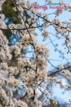 Brigh Spring Festival - 031
