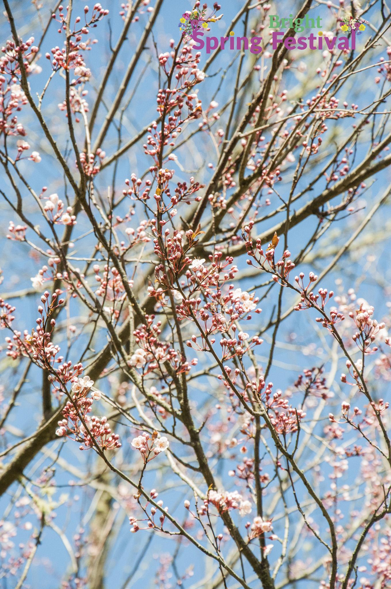 Brigh Spring Festival - 041