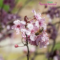 Brigh Spring Festival - 052