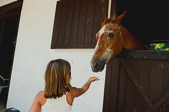 horselop.jpg