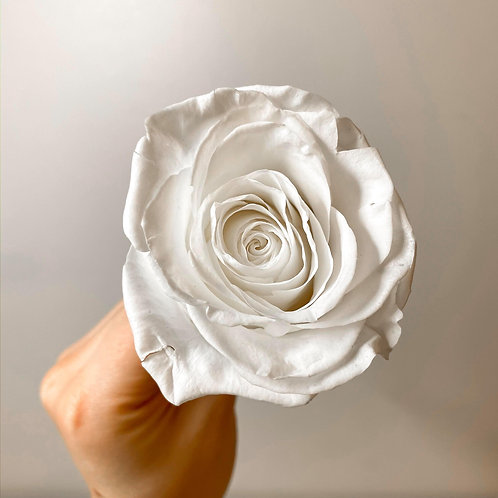 INFINITY ROSE - pure white