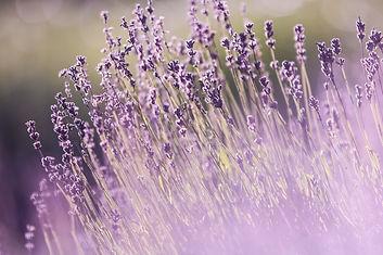 aromatherapy-aromatic-beautiful-flowers-
